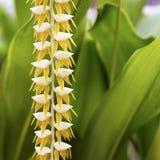 黄色热带花 免版税库存照片