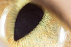黄色猫眼 2009朵超级花宏观的夏天 免版税库存图片