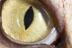 黄色猫眼 2009朵超级花宏观的夏天 免版税图库摄影