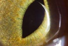 黄色猫眼 2009朵超级花宏观的夏天 库存照片