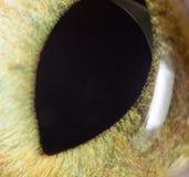 黄色猫眼 2009朵超级花宏观的夏天 库存图片