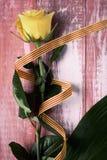 黄色玫瑰和加泰罗尼亚语旗子 免版税库存图片