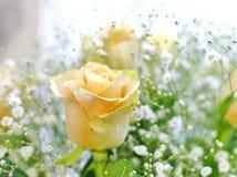 黄色玫瑰和白色小的花美丽的花束有迷离背景 库存图片