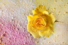 黄色玫瑰洒了在抽象背景的粉末充满色的粉末 抽象背景美丽花卉 免版税库存照片