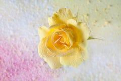 黄色玫瑰洒了在抽象背景的粉末充满色的粉末 抽象背景美丽花卉 库存图片