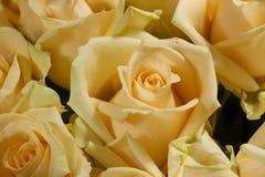 黄色玫瑰美丽的花束 库存照片