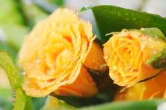 黄色玫瑰花束。 免版税库存图片