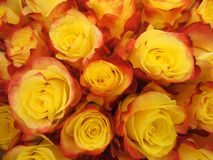 黄色玫瑰顶视图花束  库存图片