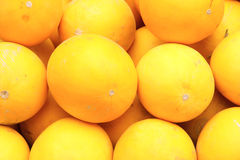 黄色瓜 图库摄影
