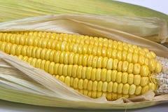 黄色甜玉米 免版税库存图片