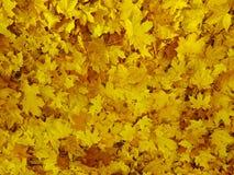 黄色留下背景,感恩 免版税库存图片
