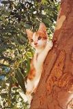 黄色白的猫 免版税库存图片