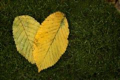 黄色的心脏在绿色青苔背景离开 库存图片