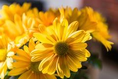 黄色的接近的花 库存照片