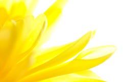 黄色的摘要接近的花 免版税库存照片
