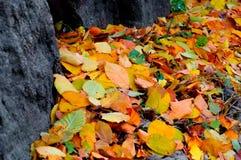 黄色的秋天烘干在石头中的叶子 免版税库存图片