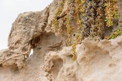 黄色石灰石自然本底的侧视图与七高八低的表面的与海波浪使光滑的黑暗的凹陷 免版税库存图片