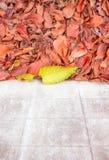 黄色离开与红色叶子在白色墙壁旁边 JPG 库存图片