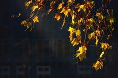 黄色离开在阳光下 库存照片