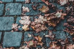 黄色秋叶说谎在蓝灰色铺路石的,摘要 免版税库存照片