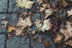 黄色秋叶说谎在铺路石的,抽象backgr 库存照片