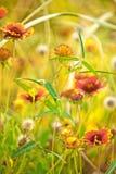黄色秋天俏丽的花关闭  库存照片