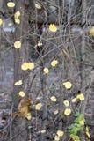 黄色秋天叶子垂直的照片  库存照片