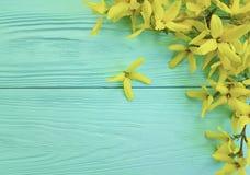 黄色秋天开花在蓝色木背景的季节 库存图片