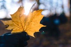 黄色秋天枫叶手中冒险摩托车,摩托车骑士齿轮,摩托车司机看,活跃生活方式的概念, 库存照片