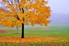 黄色秋天树在一个有雾的早晨 图库摄影