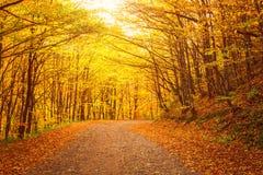黄色秋天森林公路,自然晴朗的风景 免版税库存图片