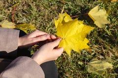 黄色秋天槭树叶子在手上 库存照片