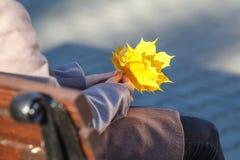 黄色秋天槭树叶子在手上 免版税库存图片