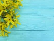 黄色秋天绽放开花在蓝色木背景的自然季节 免版税库存图片