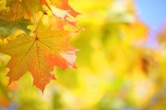 黄色秋天背景 图库摄影