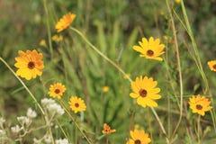 黄色秋天花的力量 库存图片