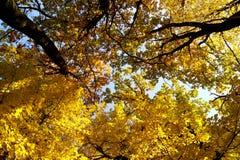 黄色秋天颜色在一个好天在公园 库存照片