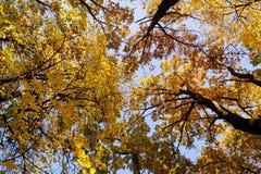 黄色秋天颜色在一个好天 图库摄影