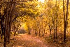 黄色秋季树的图片 库存照片