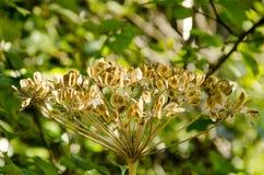 黄色种子在阳光下 免版税库存图片