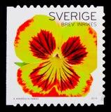 黄色红色蝴蝶花,植物群开花-一般serie,大约2010年 图库摄影