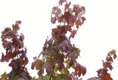 黄色背景纹理留下秋天叶子背景 免版税库存照片