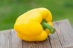 黄色胡椒特写镜头,在绿色自然背景的辣椒粉 室外 免版税库存图片