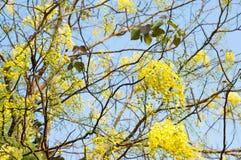 黄色艺术花在多雨森林Prajinburi泰国里 库存照片