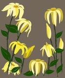 黄色花传染媒介设计 库存照片