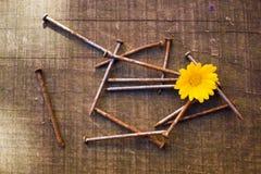 黄色花和一束生锈的钉子 免版税图库摄影