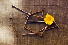 黄色花和一束生锈的钉子 免版税库存照片