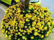 黄色花和汽车 免版税库存图片