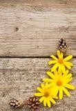黄色花和锥体在土气木背景在秋天 flatley 垂直 免版税库存照片