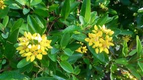黄色花在庭院中间开花 免版税库存图片